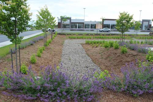 Stormwater Management: The Role of the Landscape and Horticulture Profession