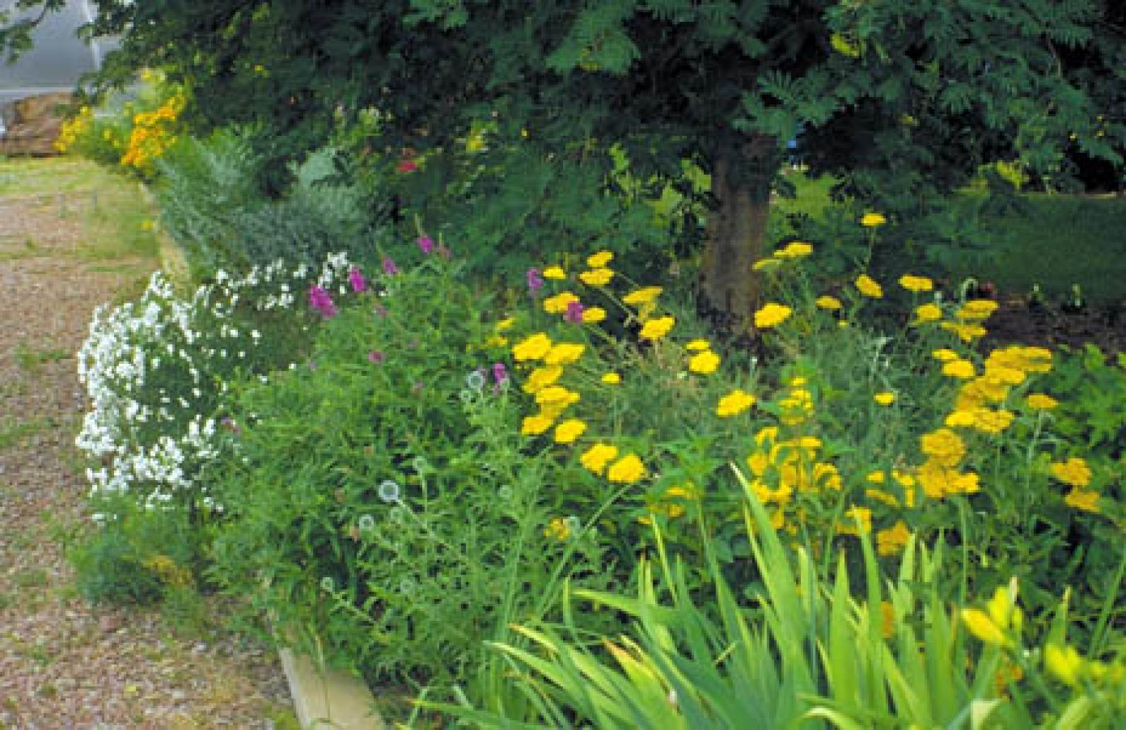 Xeriscaping (above) is not synonymous with Zeroscaping (below).