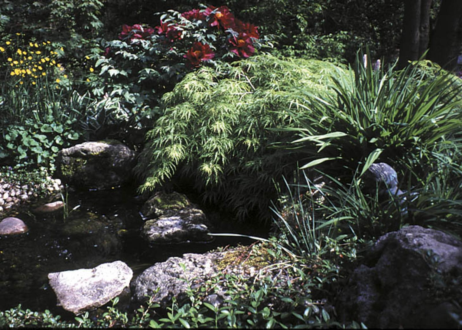 A garden that connects with our senses through water seems more exciting, complete and memorable.