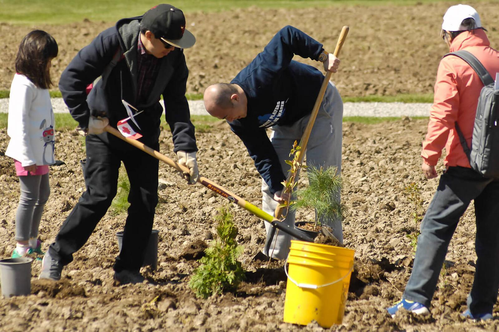 Vineland soil remediation workshop and tree planting for Soil remediation