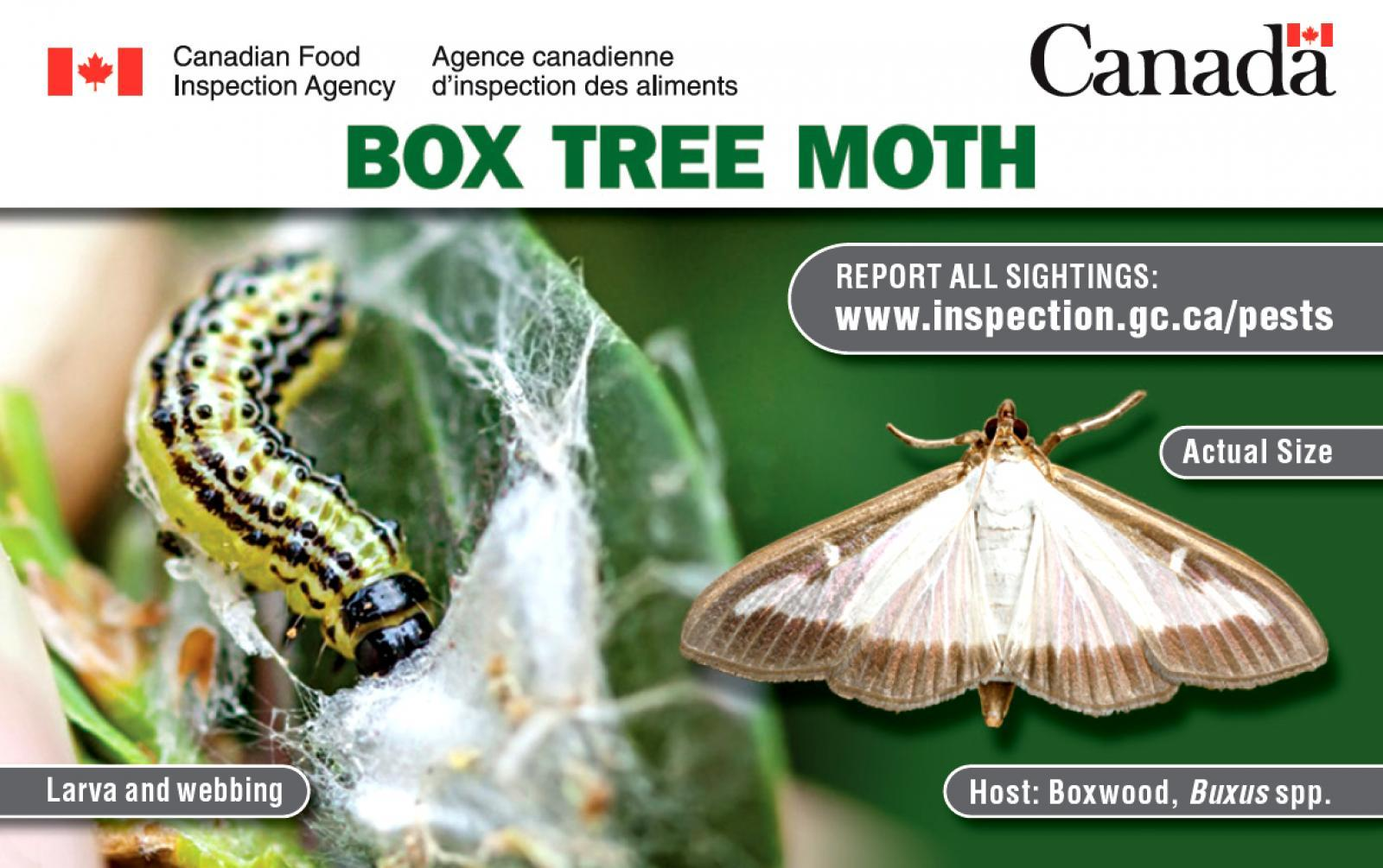 Box tree moth identification card