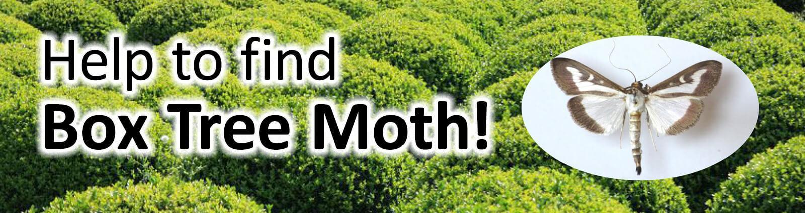 Landscape Ontario leads program to control the spread of box tree moth