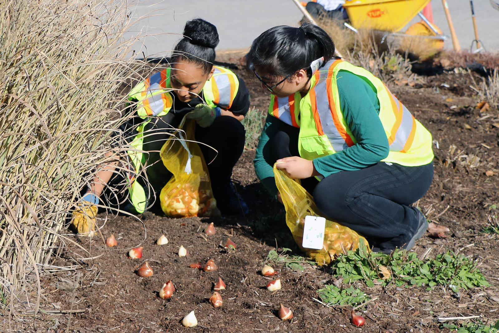 Students from St. Joan of Arc Catholic Secondary School plant over 6,000 bulbs around the LO site.