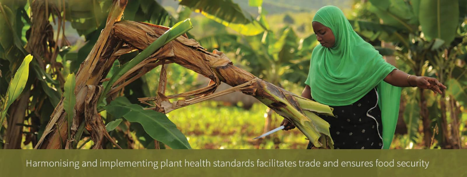 UN Names 2020 International Year of Plant Health