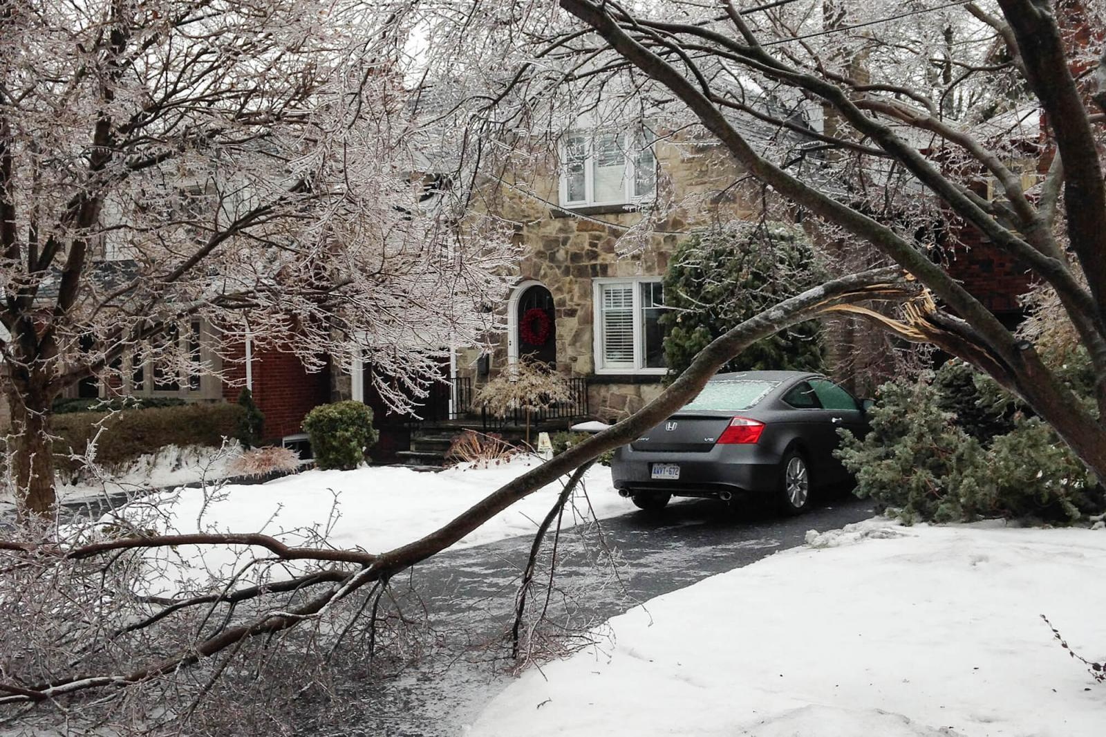 Ice storm may benefit trees