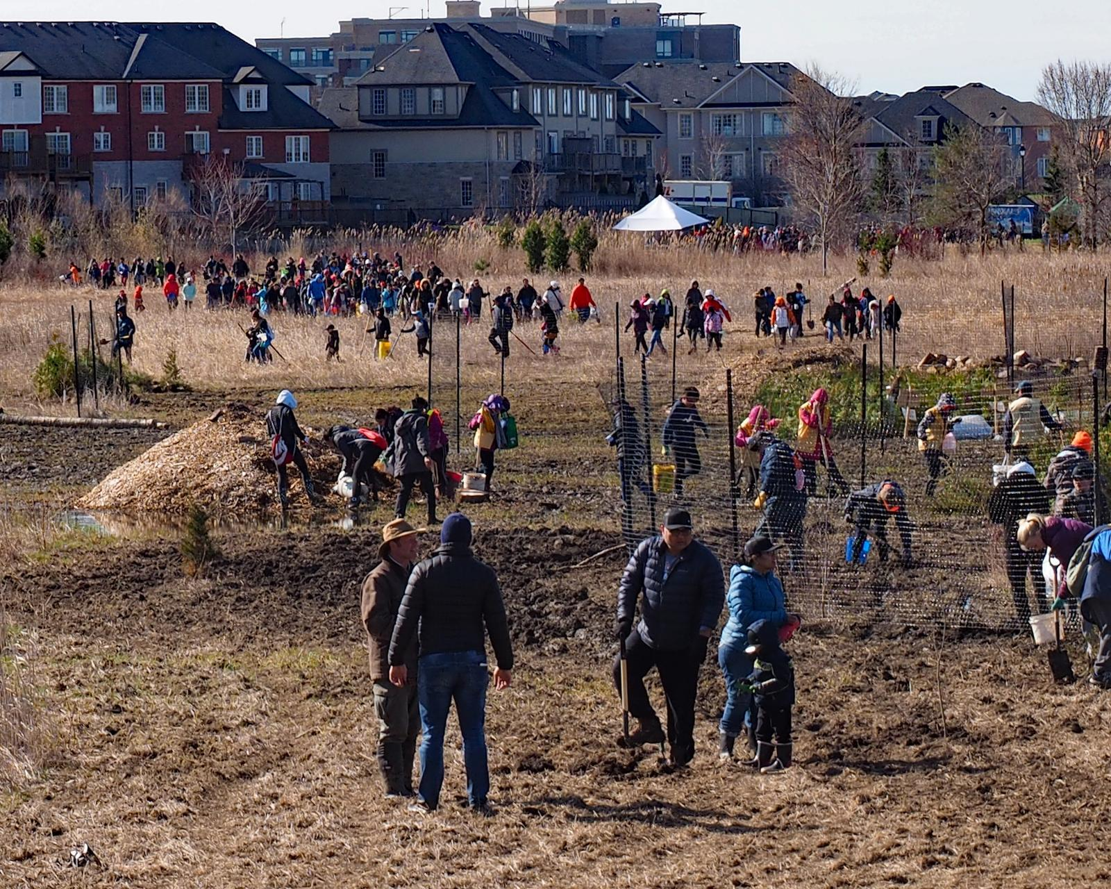 10,000 Trees Spring 2020 planting