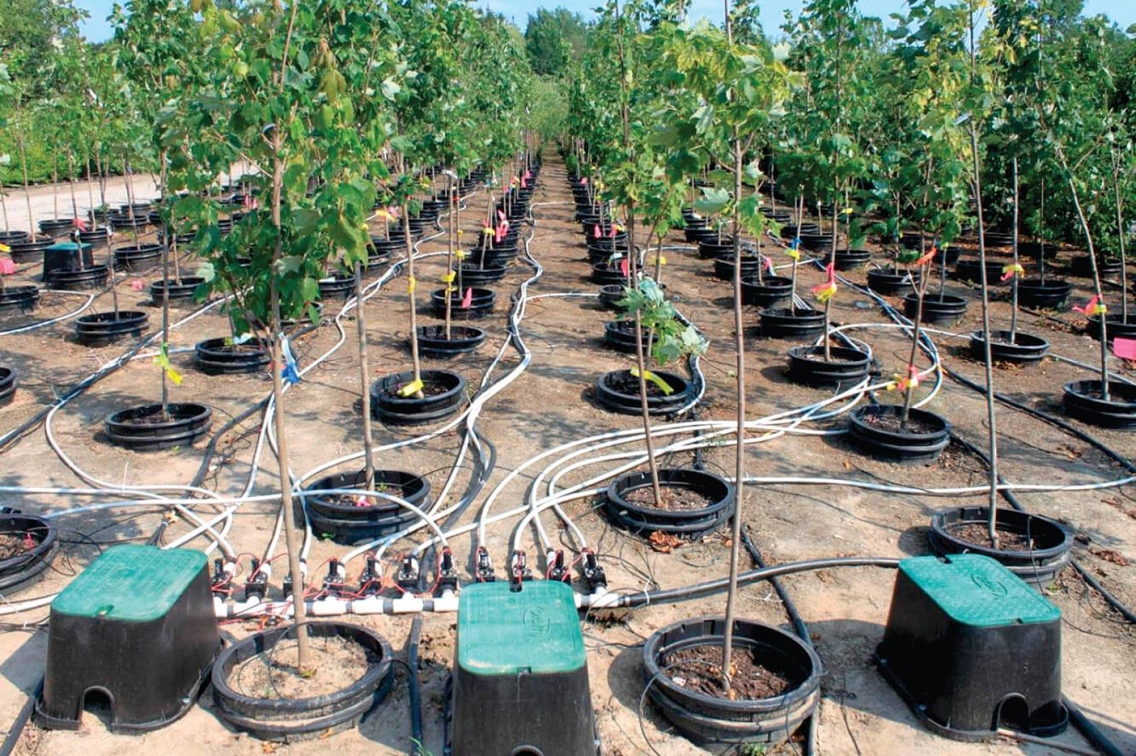 Wireless soil moisture sensors a good option for pot-in-pot system