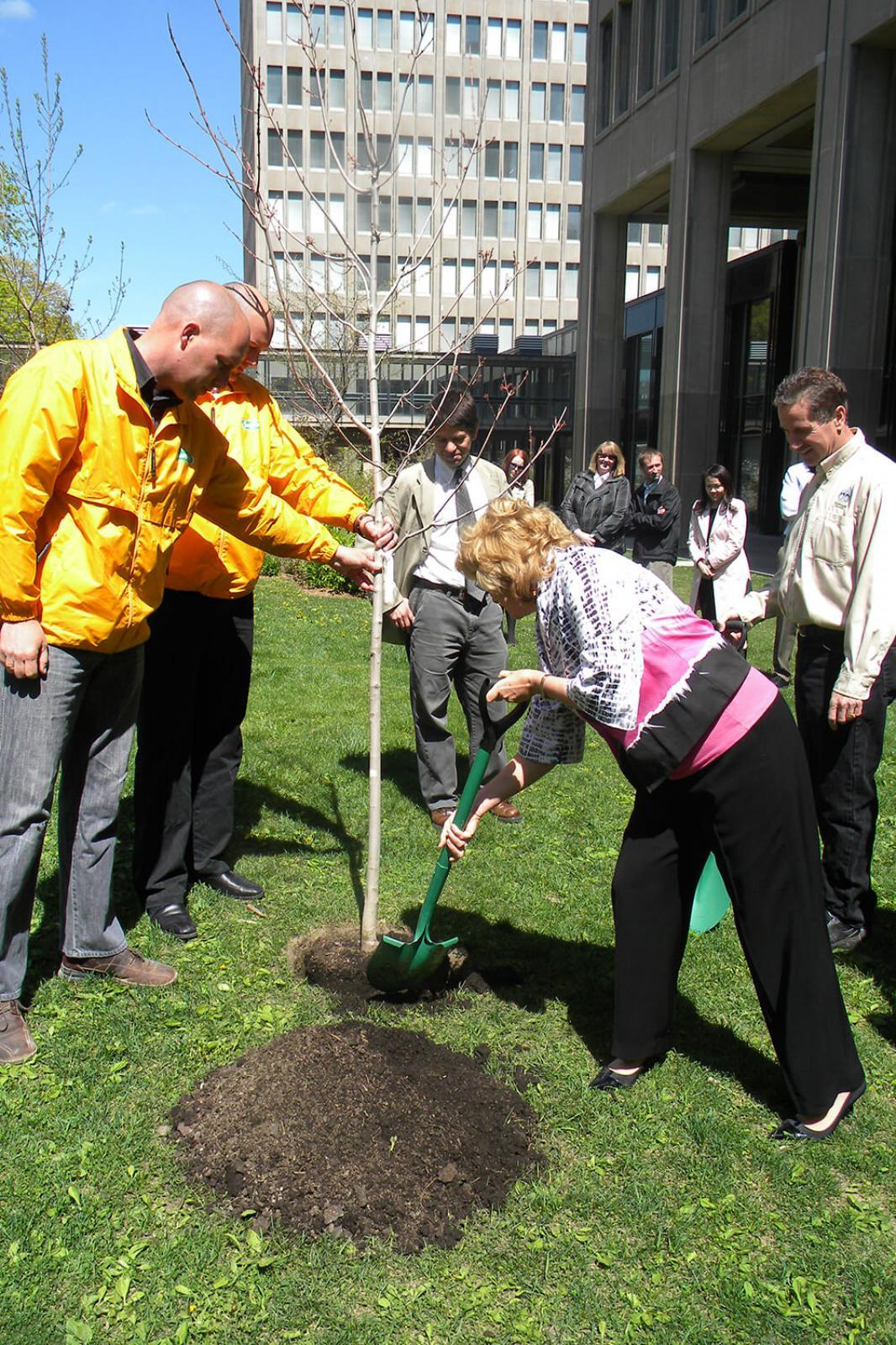 Minister of Natural Resources, Linda Jeffery, plants a red maple at the grounds of Queen's Park, as Peter and Tim van Stralen of Sunshine Grounds, Geoff Cape of Evergreen and Art Vanden Enden add their encouragement.