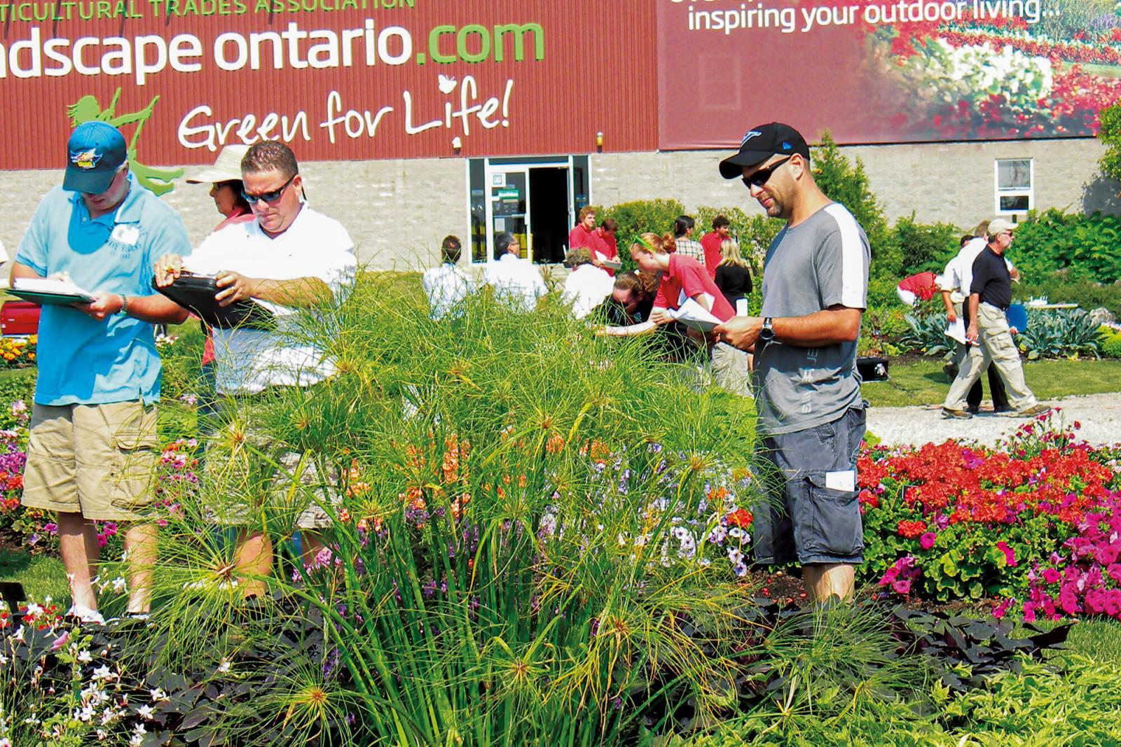 Trial gardens show off best of the new plants
