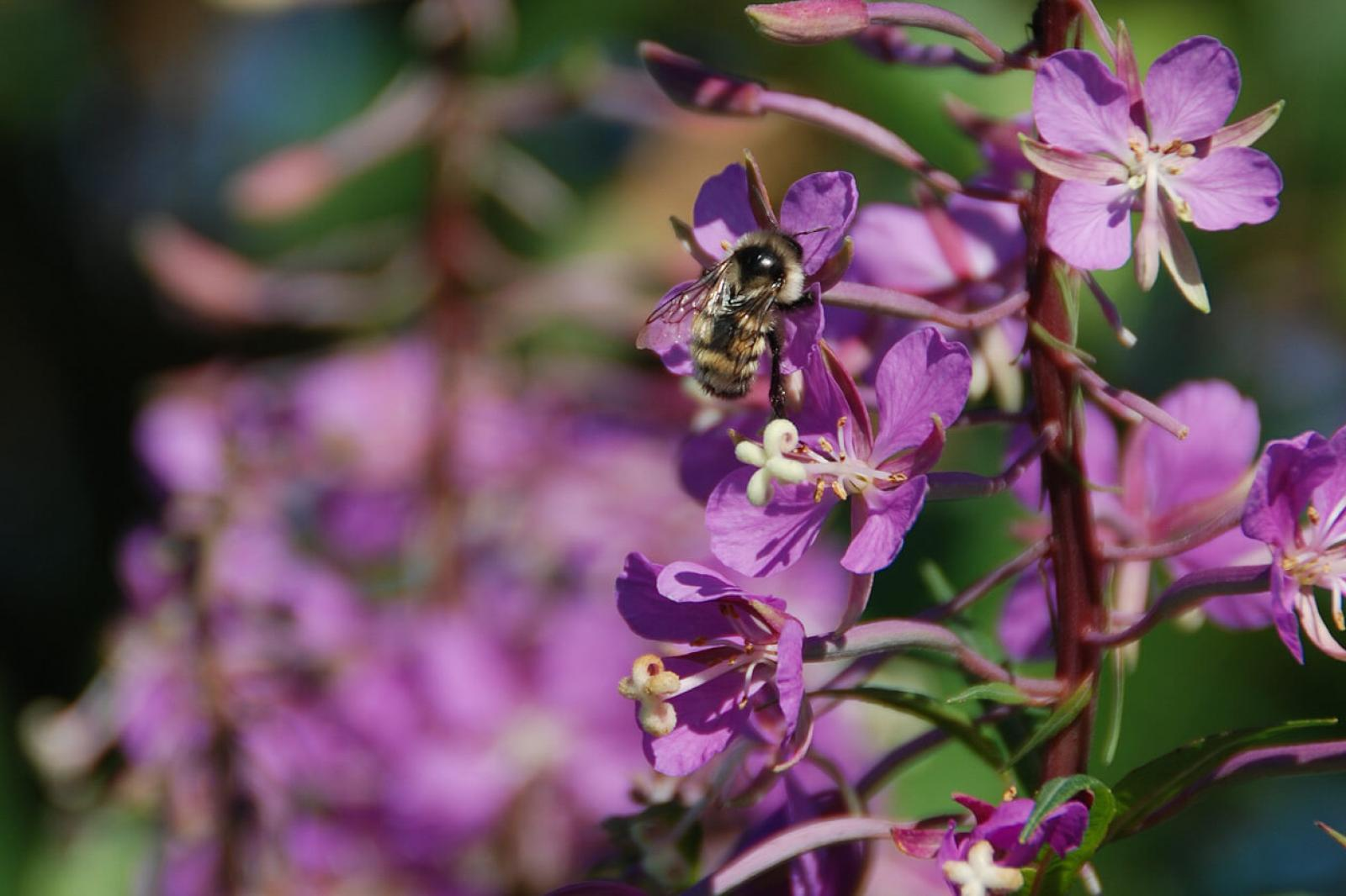 Landscape wish list for 2020: Pollinator success
