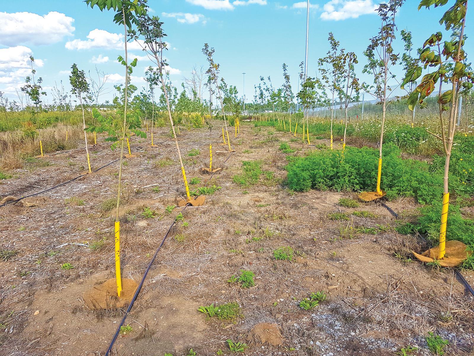 Idea helps trees succeed