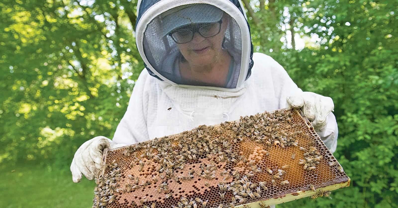 Sunnybrook Hospital promotes pollinators