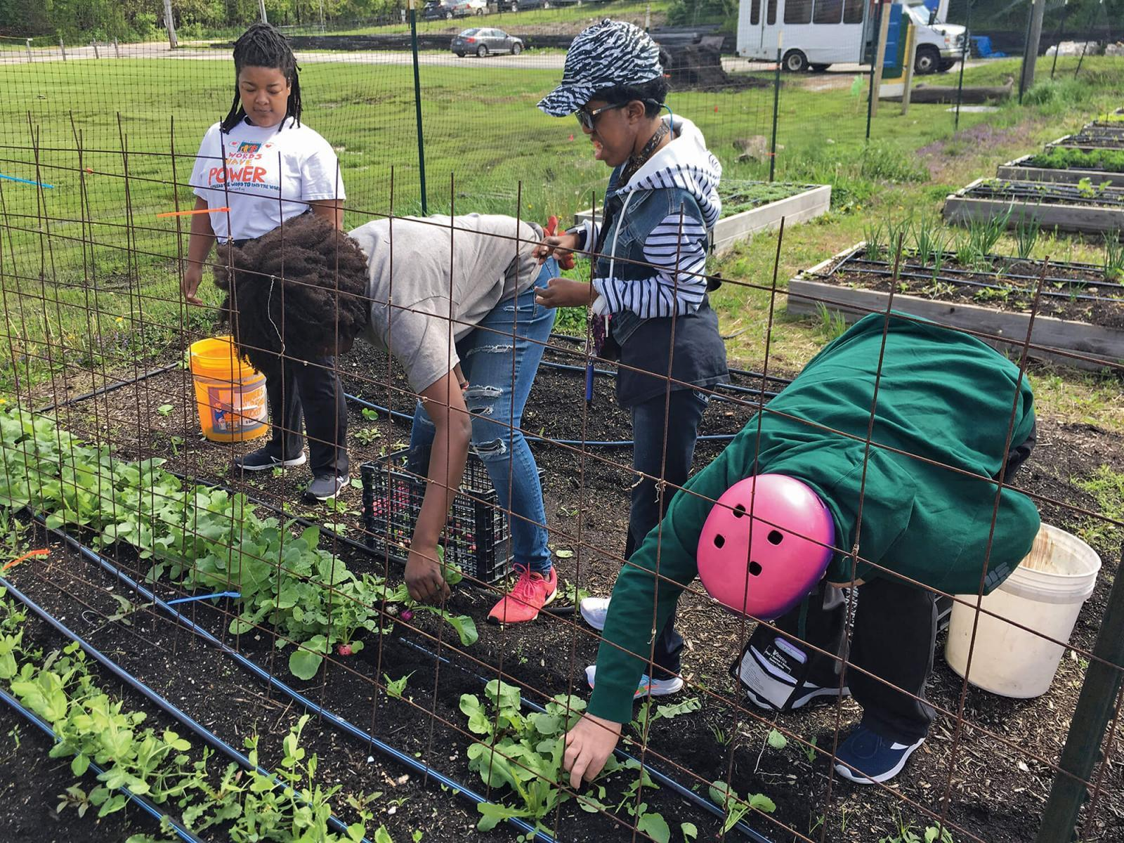 Voting opens for NGB garden grant