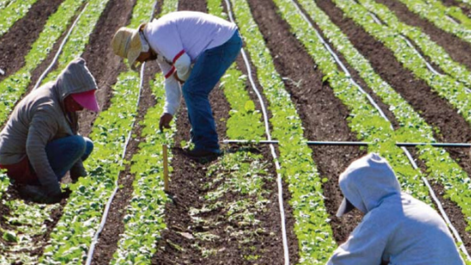 WSPS Resources for temporary foreign agricultural workers