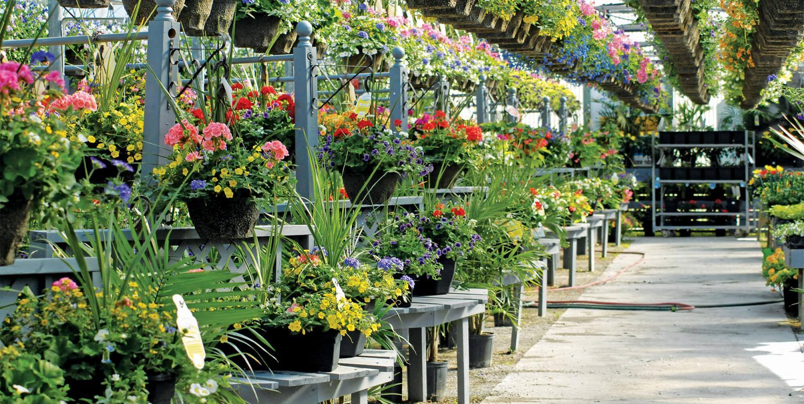 Providing quality plants in a wide selection with great customer service will keep the independent garden centre successful.