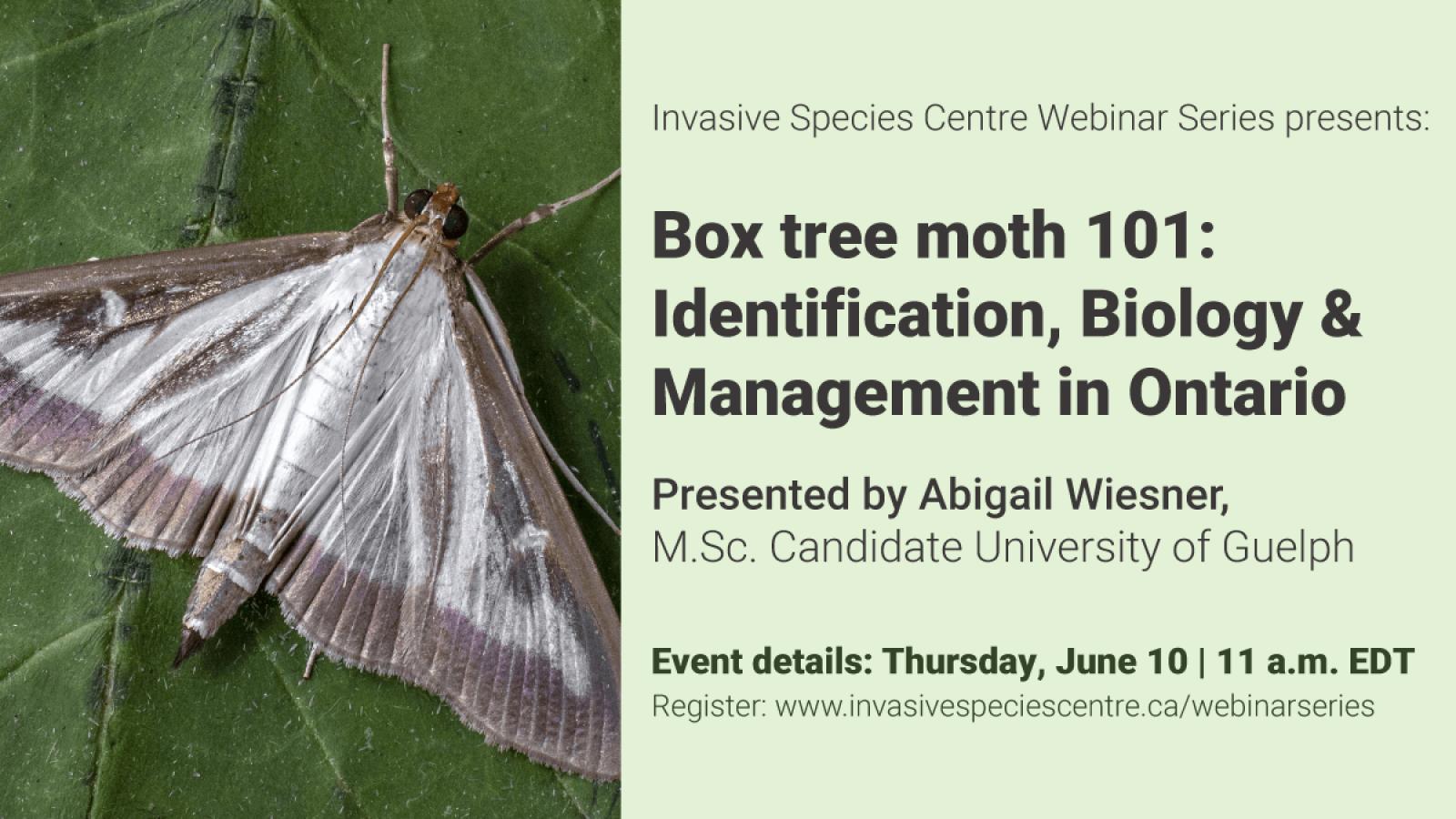 Box tree moth 101 webinar