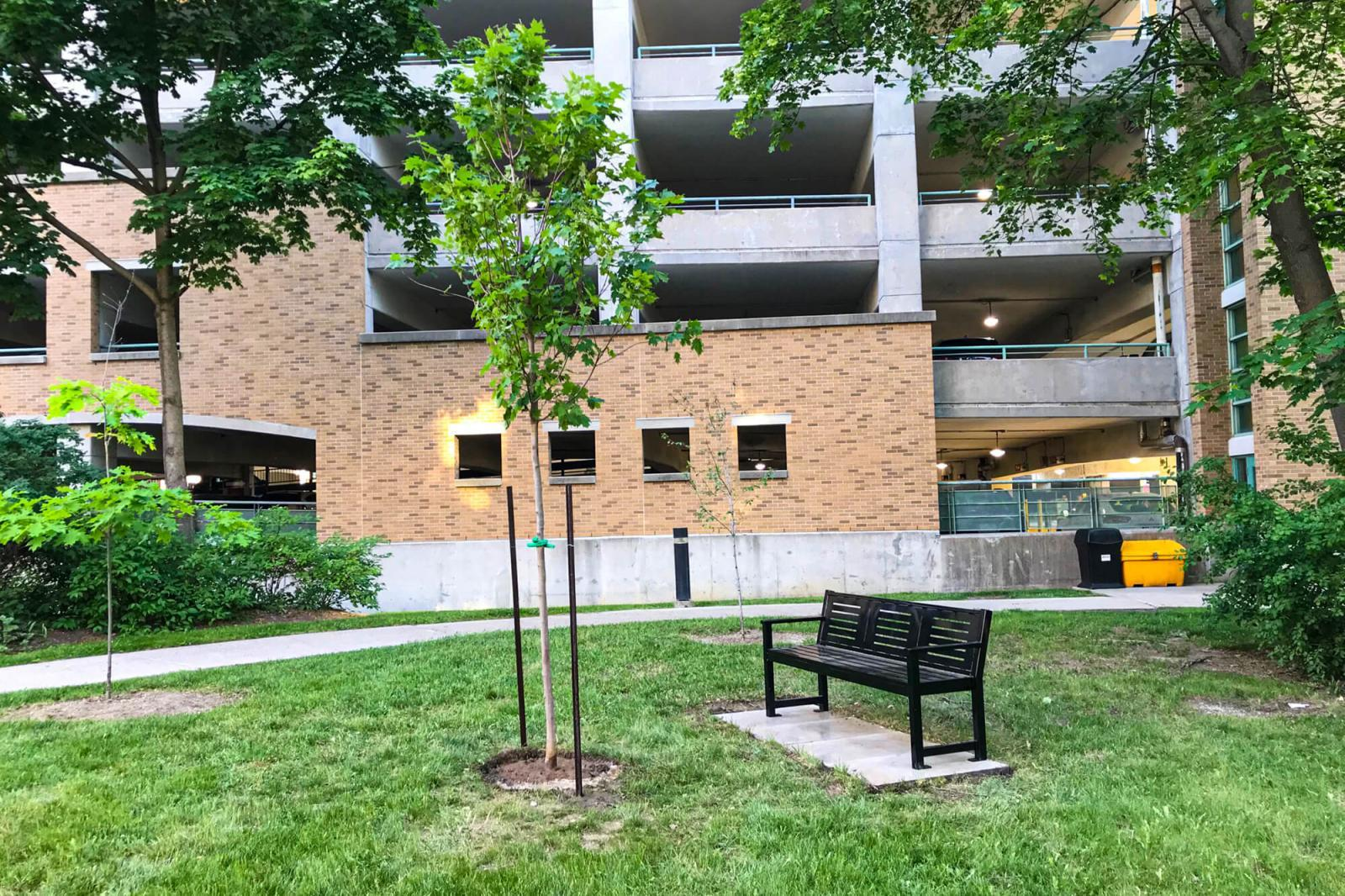 The first installation of 1bench1tree took place at Sunnybrook Hosptial in June 2021.