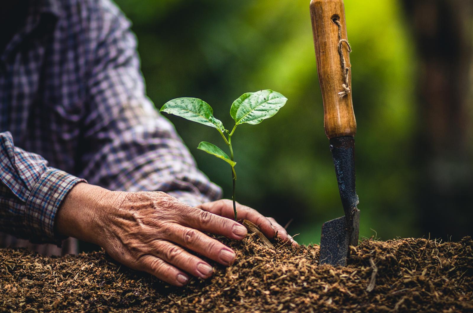 Ontario Contributes 880,000 trees to Living Tribute