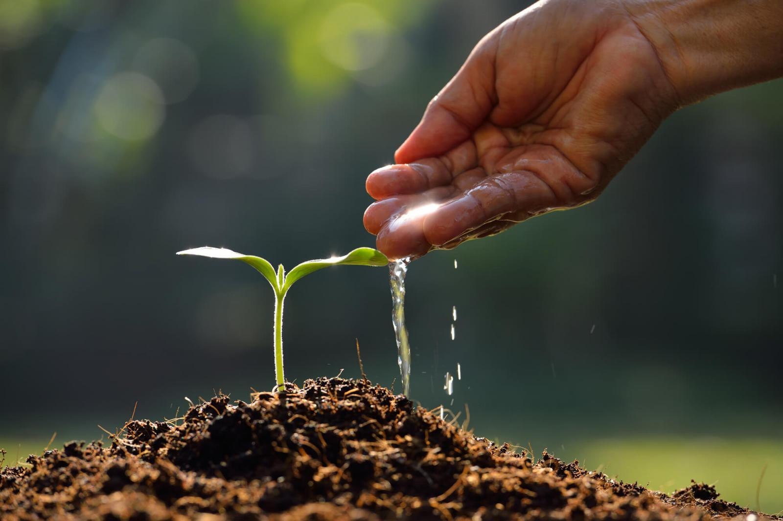 The therapeutic value of horticulture