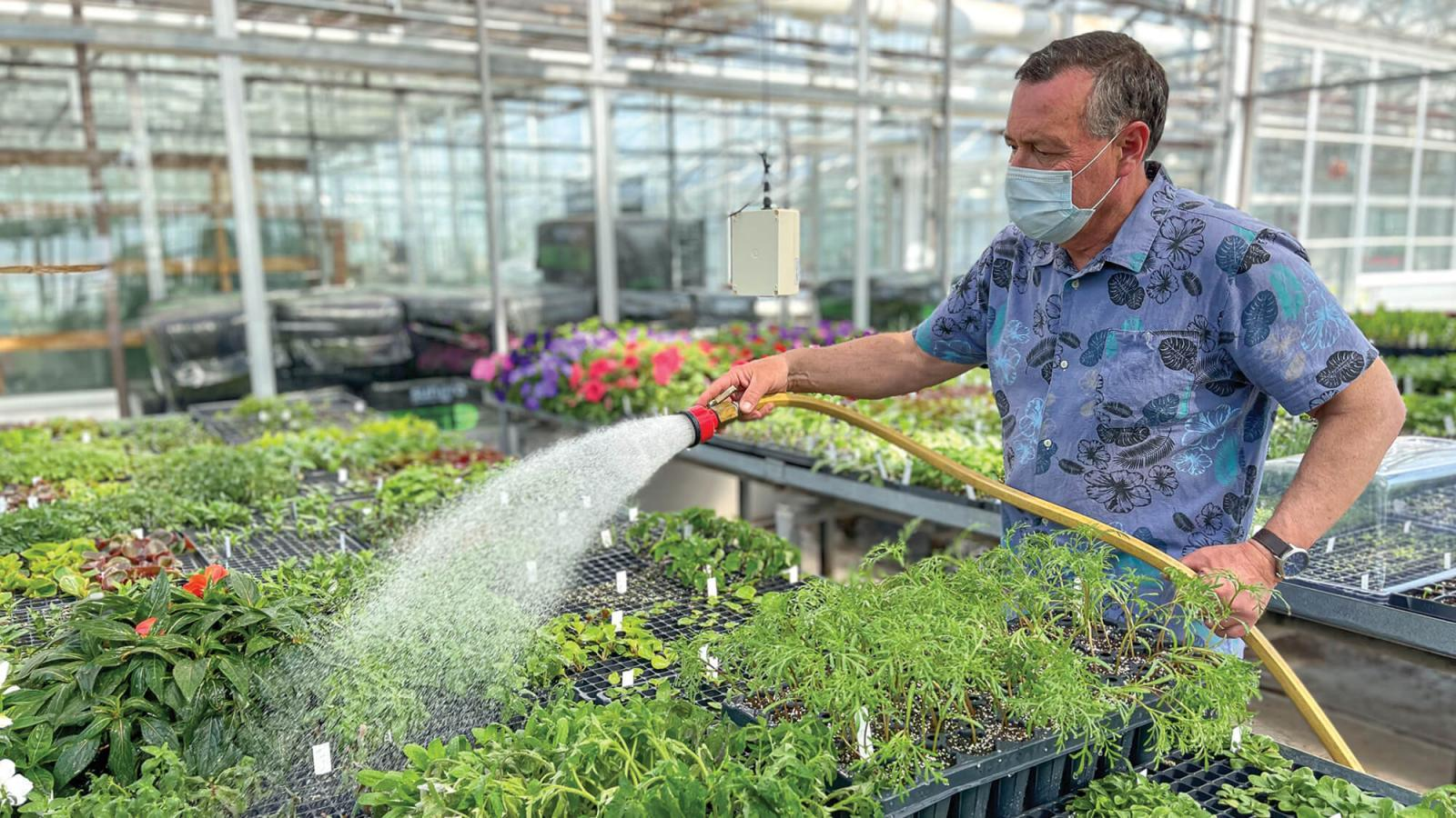 Watering young plants that were propagated by seed in 288 cell plug trays.