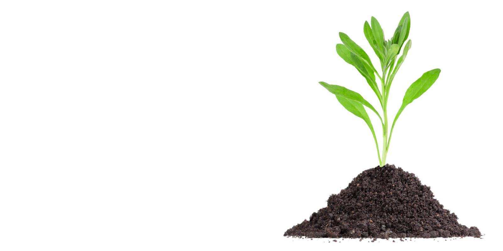 Healthy soils produce thriving plants