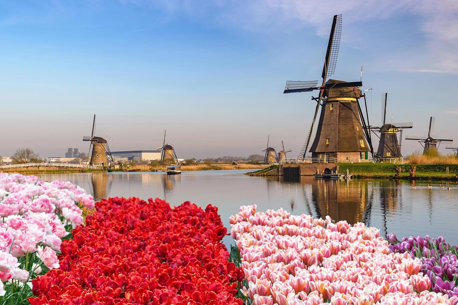 Flooding in the Netherlands drowns multiple tulip bulb crops